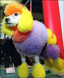 [Image: poodle.jpg]
