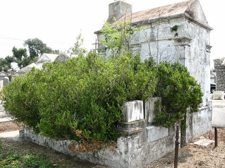 giant bush